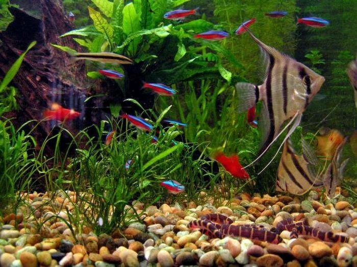 Аквариумистика – разведение растений и рыбок