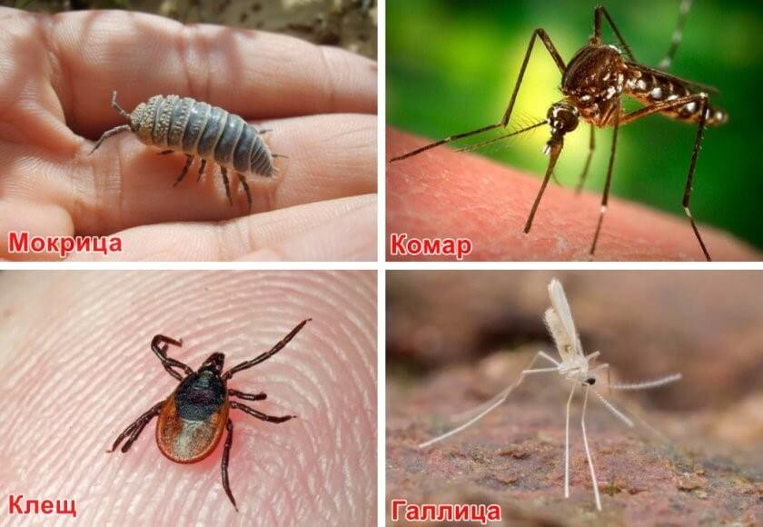 Защита от вредителей и болезней