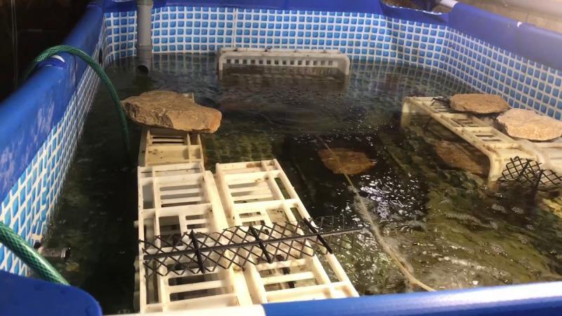 Разведение в бассейне
