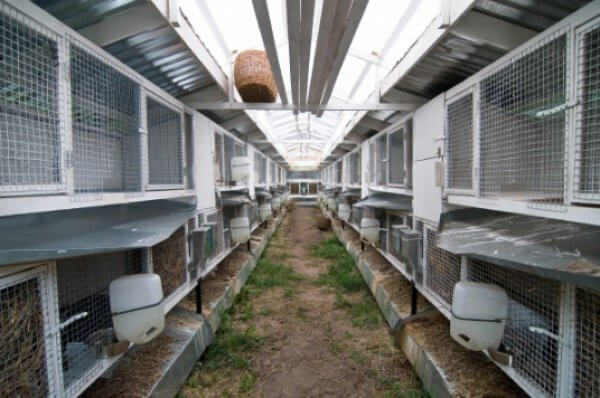 Технологии выращивания, вариант 1