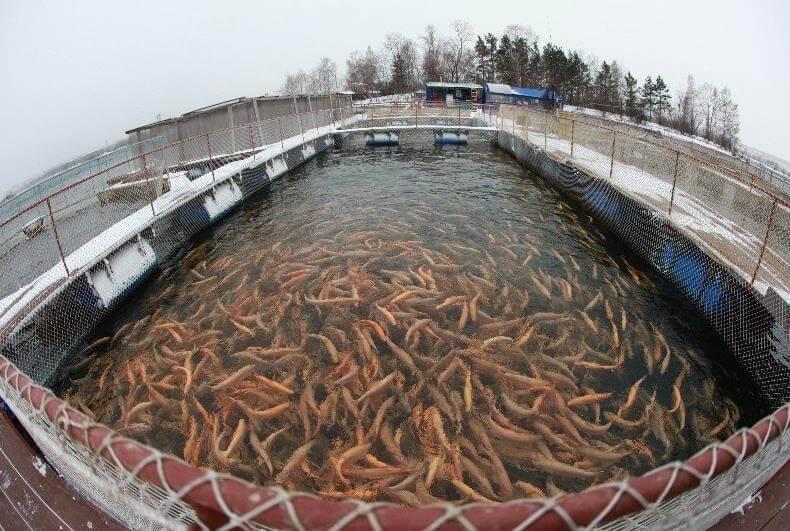 Виды рыборазводных водоемов