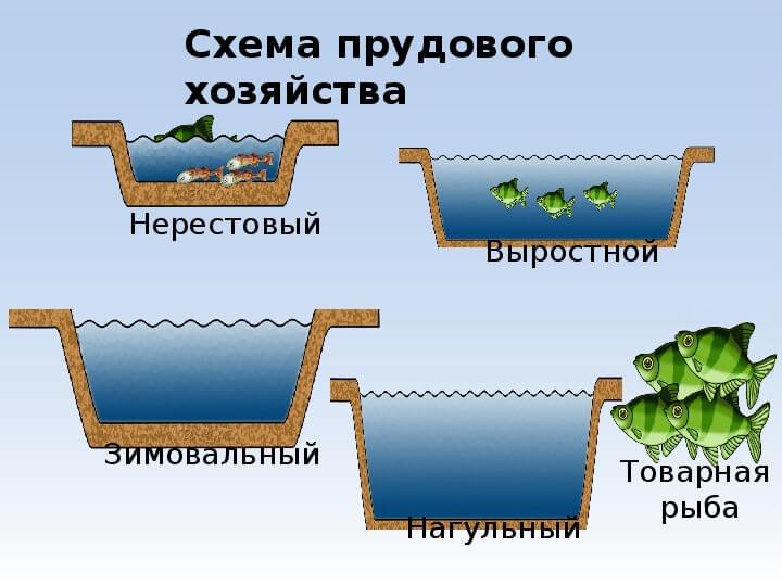 Схема прудового хозяйства